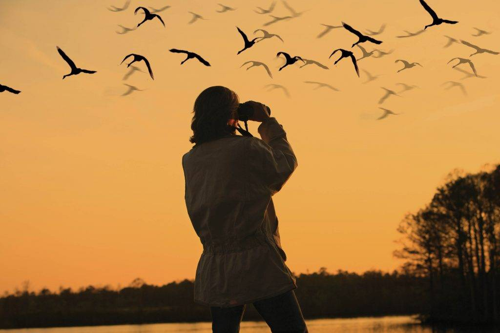 5-Best-Places-in-the-World-for-Birding1